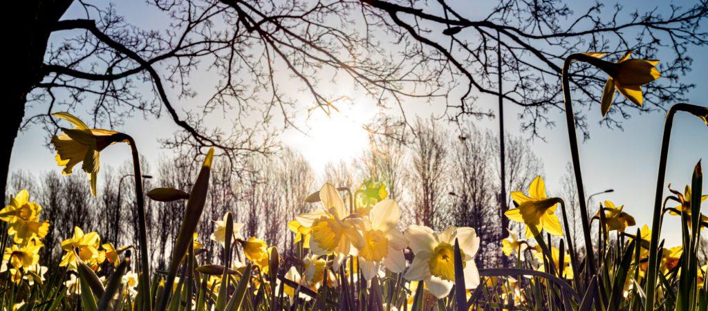 Blomster ved Genforeningssten i Spang (4)